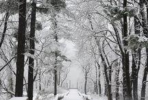 Snowy day at Untermyer Gardens