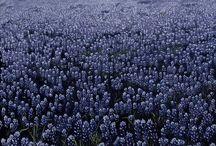 fiori campo