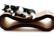 stuff for cats