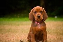 Puppies  / by Michael Bradshaw