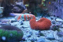 Saltwater fish and corals