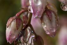 photography - flora