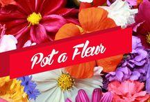 Pota Fleur Çiçek / http://potafleurcicek.com/
