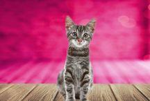 GoodieDrop til din Kat