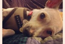 Adoptable Dogs in Los Angeles / by Carie Maniscalco
