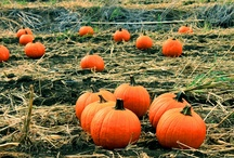 Pumpkin Patch / by Allens Boots