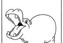 Nijlpaarden (Hippo) Ria.