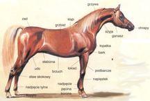 Konie, jeździectwo / horses