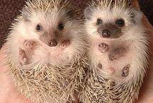 Cute Creatures / by Kasey Jago
