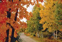 Autumn splendor...my favorite season