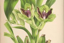 botanical art.