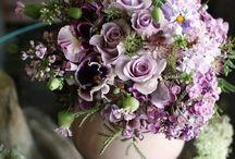 цветы сиреневые, фиолетовые