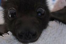 Baby Bats / They remind me of someone I used to know...