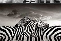 photo manipulations