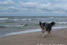 Unterwegs mit Hund / Wir sind dann mal weg - Reisen und genießen mit dem Vierbeiner