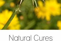 Natural Remedies / If you're looking to creating your own herbal remedies, and learn about the benefits and risks associated with a variety of herbal treatments, you've come to the right place!
