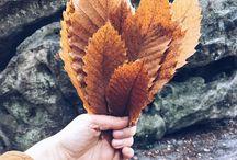 // season : autumn // herbst // / Autumn Decoration - seasonal inspiration. herbst. herbstbasteln. kastanien, eicheln, laub