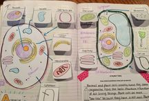 BIOLOGY SO AWESOME