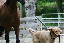Paarden met hond