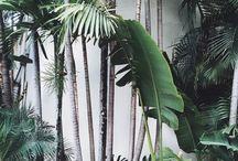 Grønnplanter / styling, interiør, natur