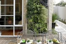 GREEN THUMB / Living walls and more...