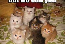 #CATS♥