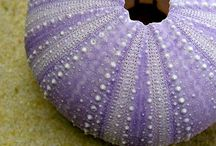 COLOR: Ladies in Lavender / by Melody Ball