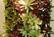 bromeliad wall garden