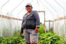 Farmers / News about farmers
