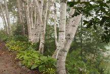 Gardening - Woodland and Shady Gardens / by Amanda HockeyLove
