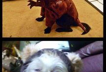 Dachshund Costumes and Other Dressed-Up Pets!