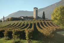 Food & Wines Tours