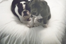 doggies & other cute animals / by Amie Sills