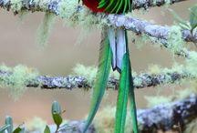 Birds / by Ines Manzanares Ortega