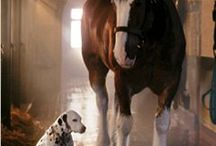 Dieren: Twee Diersoorten / Bijzondere foto's over dieren van twee verschillende diersoorten die vriendjes zijn / een interactie hebben / samenleven