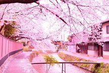 Sakura / 桜