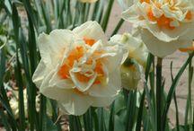 Breathtaking Flower Gardens