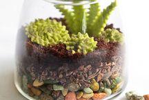 plantas y terrarios