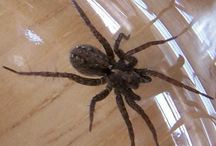 insekte en spinnekoppe
