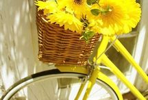 Bicykel a kvety...