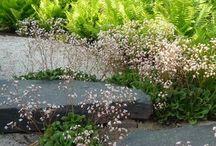 zahrada G