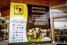 BeefExpo / Evento de Pecuária de Corte