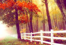 ~* Trees & Flowers *~