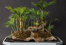 palmy v lesa