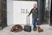 Oslo / Los mejores destinos dog friendly de España y Europa, consejos y estilo para hombre y las aventuras de Eros.