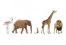 Real life animals / by The Wall Sticker Company