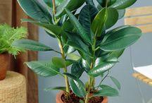 Plantas oxigenadoras