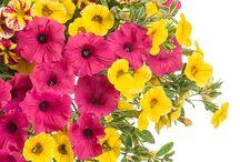 Flowers - Proven Winners