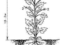 Сад Огурцы