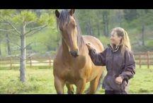 {horses}